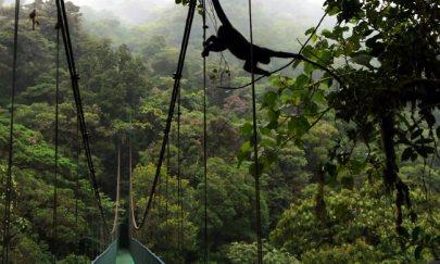 monteverde-cloudforest